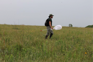 A zoo conservationist searches for dakota skippers in NW Minnesota